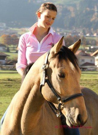 eigene pferdezucht aufbauen